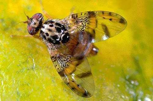 insecticida contra plaga olivo: